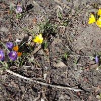 Ой, а лето то, как торопится....а ведь только 5 апреля! :: Ольга Кривых