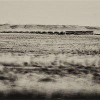 Поезд. :: Беспечный Ездок