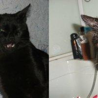 До помывки кота/после :: Валерия