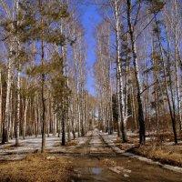 Весенними дорогами . :: Мила Бовкун