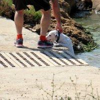 собака упала с моста в реку и ее спасли :: vasya-starik Старик
