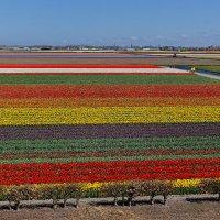 Целое море цветов :: Сергей С