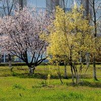 Весна :: Анатолий Чикчирный
