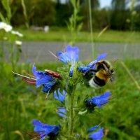 Шмель, жук и цветок :: Ирина Лебедь