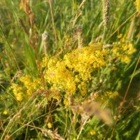 Желтые цветы :: Ирина Лебедь