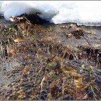 Талые воды :: Андрей Заломленков