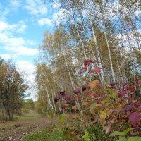 Осень :: Светлана Евсюкова