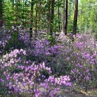 Весна на Ольхоне :: Ольга