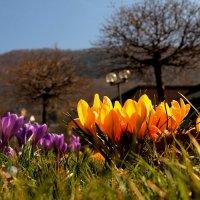 весна :: Дарья Садовникова
