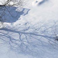 Тень-зимняя. :: АЛЕКСАНДР СУВОРОВ