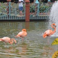Фламинго на пруду :: Demian
