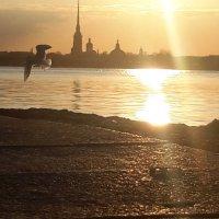 Питер,апрель,чайка :: Валерия Лидерман