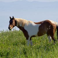 конь на природе :: Александр Деревяшкин