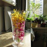 цветы из Тайланда :: Ольга