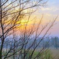 Утром в апреле :: Юрий Стародубцев