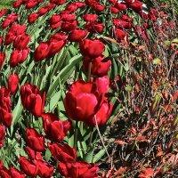 Круговорот цветов :: Валерий Дворников