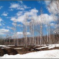 Весны пейзажи :: Андрей Заломленков