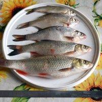 речная рыба :: Сергей Стреляный