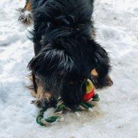 С игрушкой пёсик :: Света Кондрашова