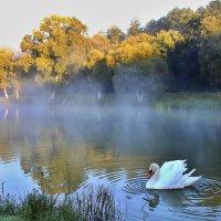 Выплыл лебедь из тумана... :: Alex Alex