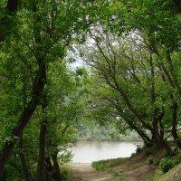 Тропинка к реке :: Сергей Тагиров