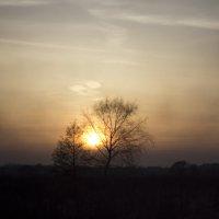 Одинокие деревья :: Руслан Лутов