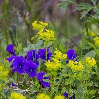 Цветы на поляне. :: юрий Амосов