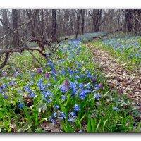 Прогулки в апреле. :: Чария Зоя