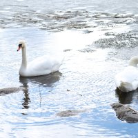на нашем озере... :: vika EGOROVA