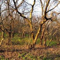 Утро в весеннем лесу :: Владимир Болдырев