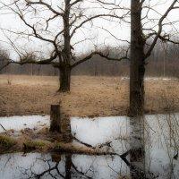 Талая вода :: Андрей Зайцев