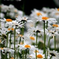 Белые реснички... :: юрий