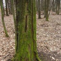 А древо жизни зеленеет :: Андрей Лукьянов