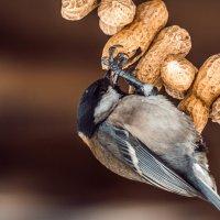 Птиц за едой :: Наталья Терентьева