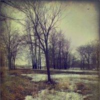 Таял последний снег.. :: Алексей Макшаков
