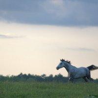 Летящий на крыльях ветра :: Наталья Терентьева