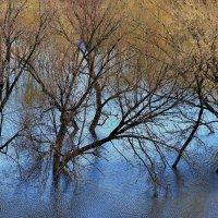 Земное продолжение воды... :: Лесо-Вед (Баранов)