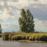 Берег реки Толбы :: Олег Попков