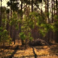 утро в лесу :: Алексей Клименко