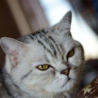 Тренируюсь на кошке :: Вячеслав Богомолов