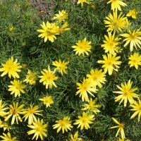 Цветы :: Екатерина zZz