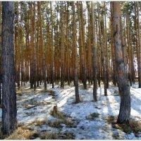 Апрель в лесу. :: Мила Бовкун