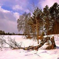 Зима... :: Елена Третьякова