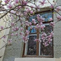 Весна...! :: Ирина Шарапова