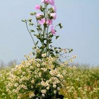Полевой букет цветов!!! :: Светлана Масленникова