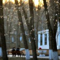 Вечер в парке :: Albina