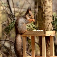 лесной обед :: linnud