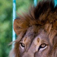 Зоопарк :: Геннадий