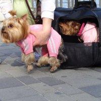 Лозунг для политиков: не кладите всех собак в одну корзину! :: Алекс Аро Аро