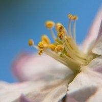 Весна апрель :: Олеся Енина